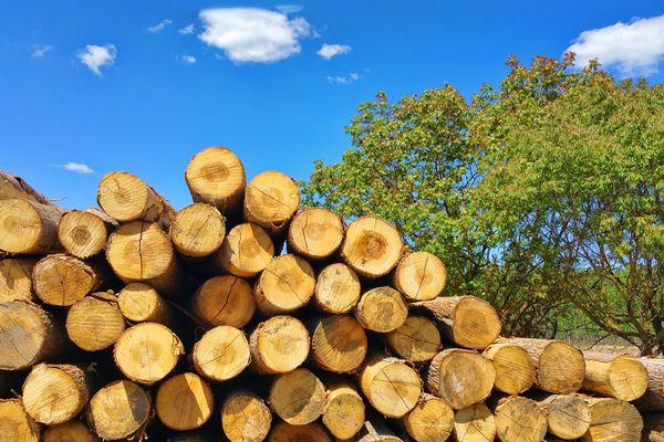 Pile of logs from poplars in La Vega valley in Granada, Andalusia, Spain