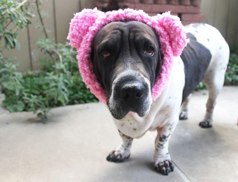 Teddy Bear Earwarmer Free Crochet Pattern for Dogs