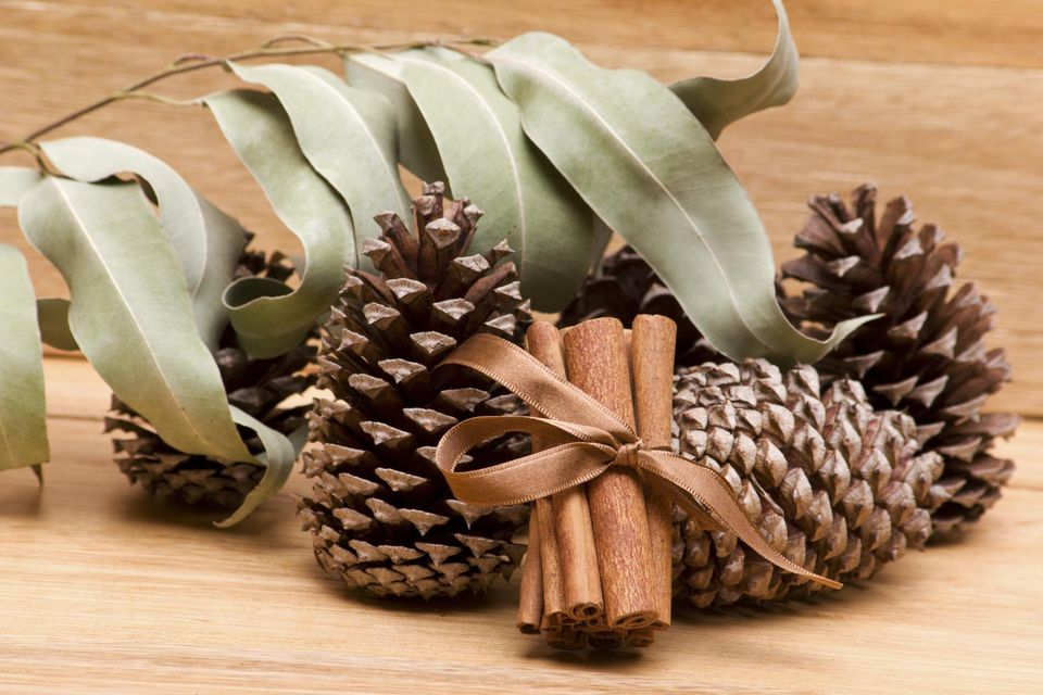 Dried collection of pine cones, cinnamon sticks and eucalyptus leaves
