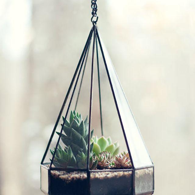 Metal succulent terrarium hanging from a ceiling