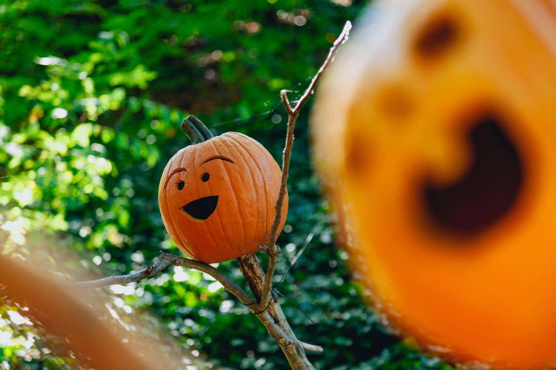 expressive happy pumpkin