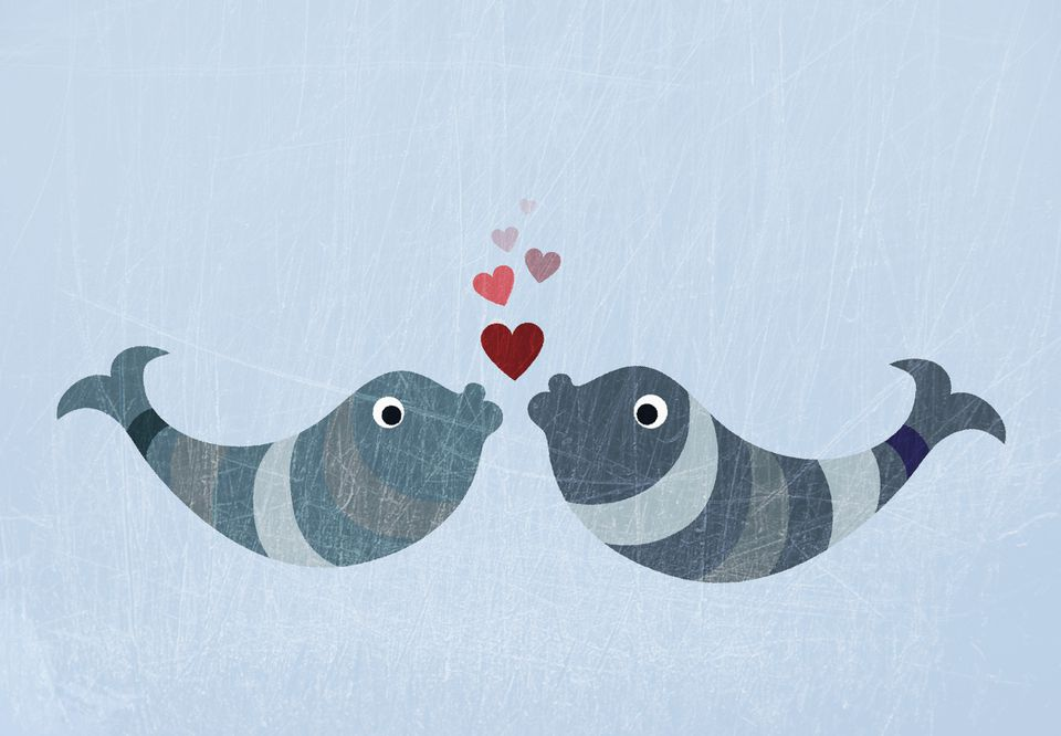 Two fish kissing