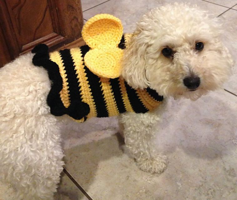 White fluffy dog in a bumblebee sweater
