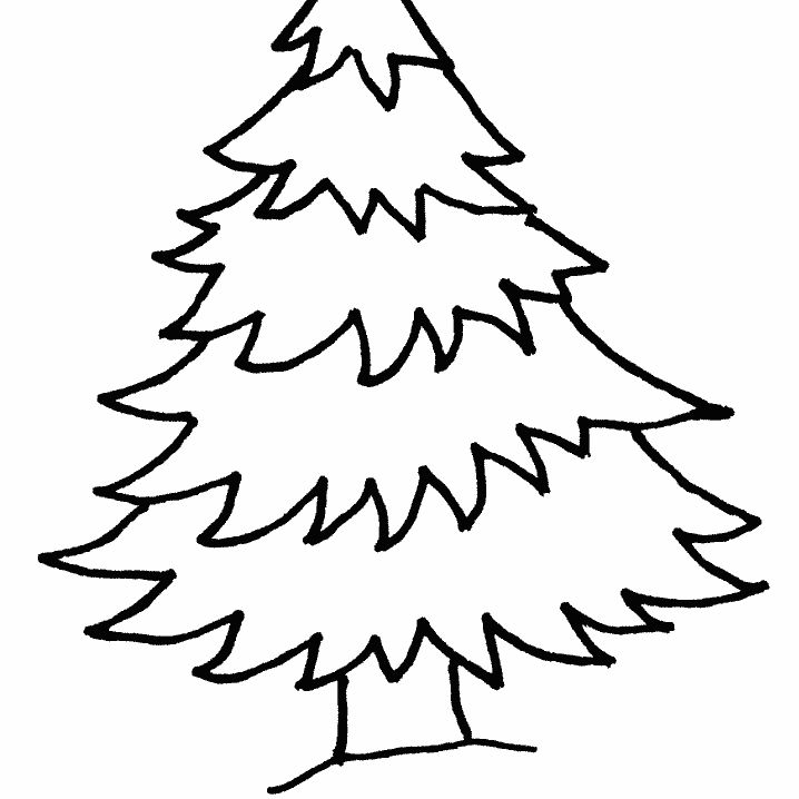 christmas tree coloring pages from coloringws a pine tree