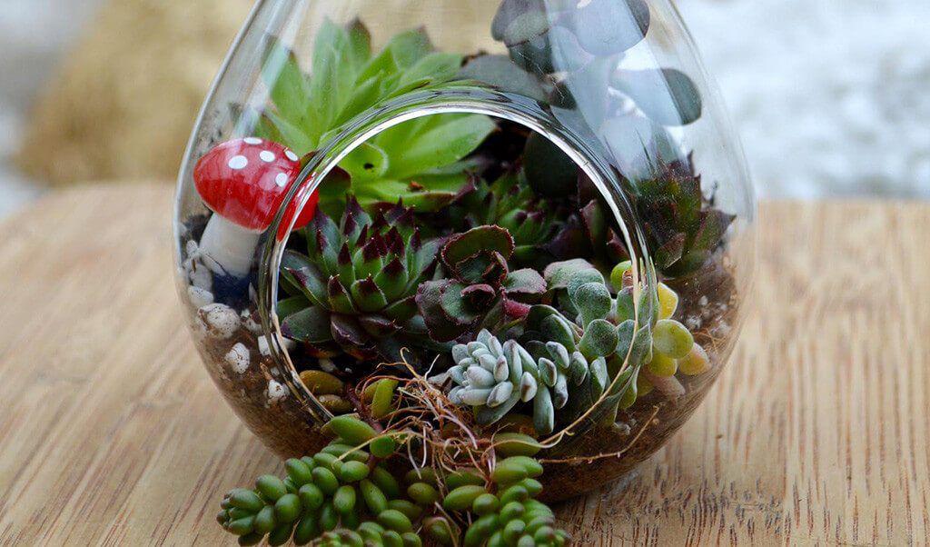 succulent terrarium sitting on a wood surface