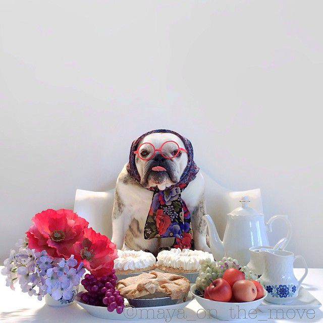 DIY grandma dog costume