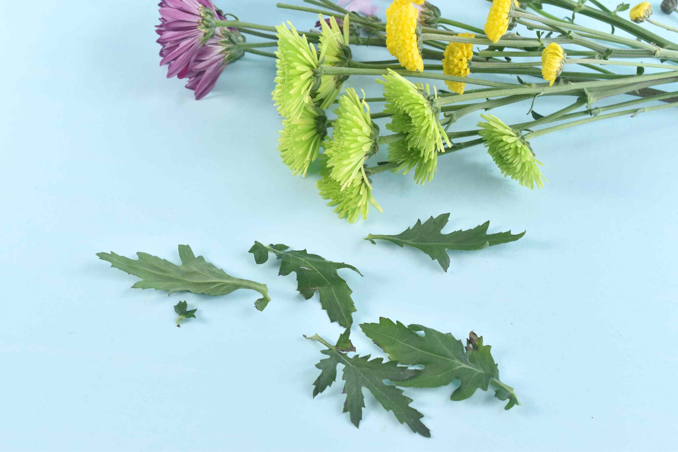 Remove Leaves From Flower Stems