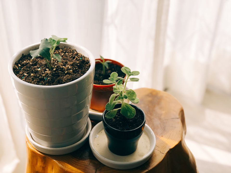 High Angle View Of Potted Plants On Tree Stump By Window