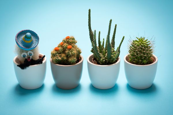 Cactus on the desk with pastel blue wall background