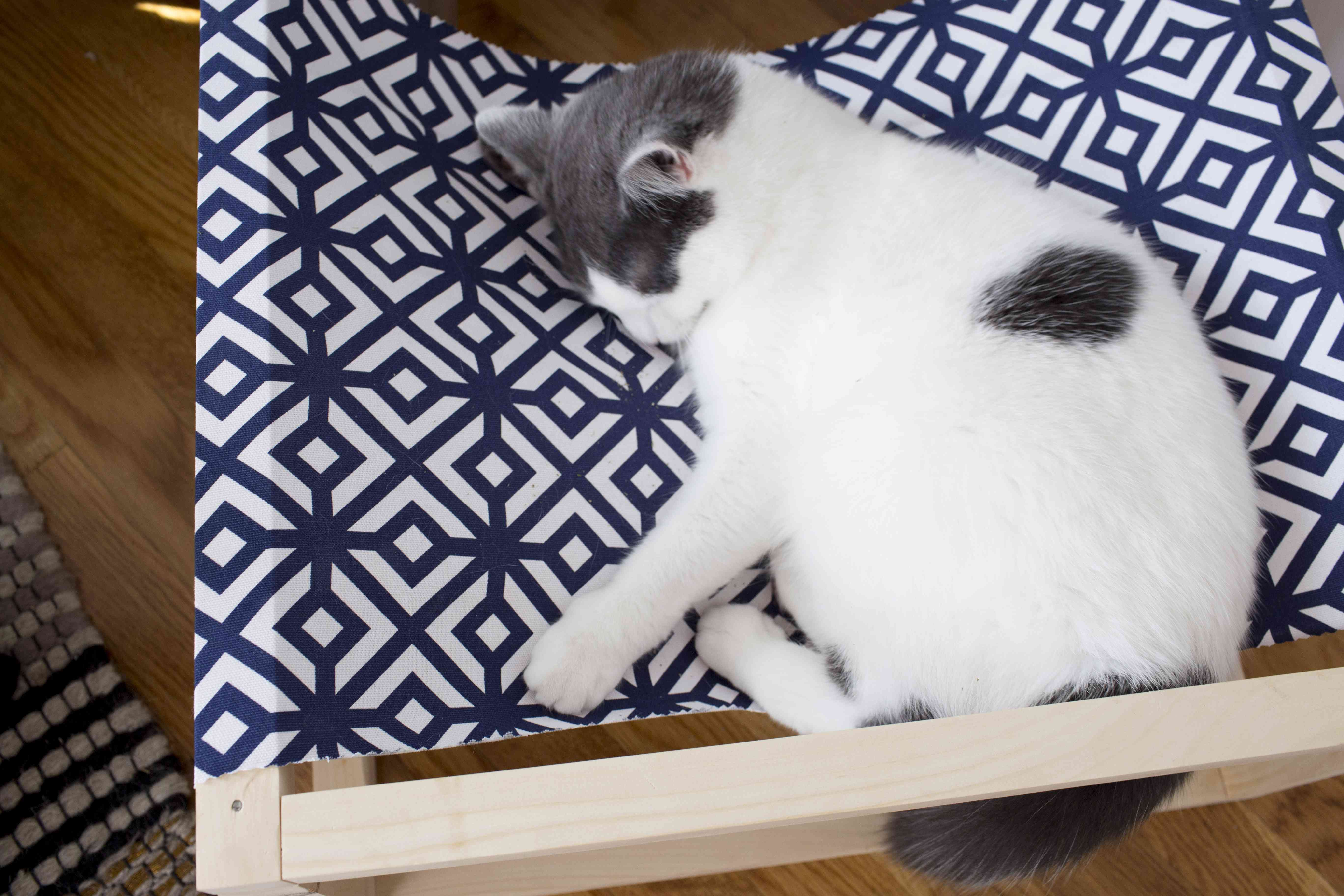 Cat sleeping in cat hammock