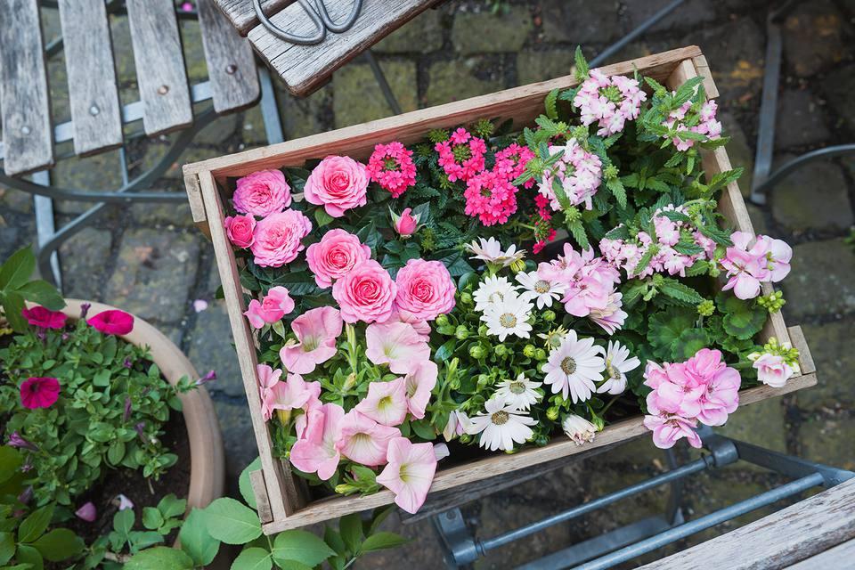 Gardening, planting of summer flowers, wooden box