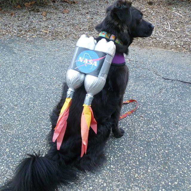 rocket dog costume