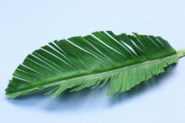 A miniature oval tree leaf shape cut into a fringe
