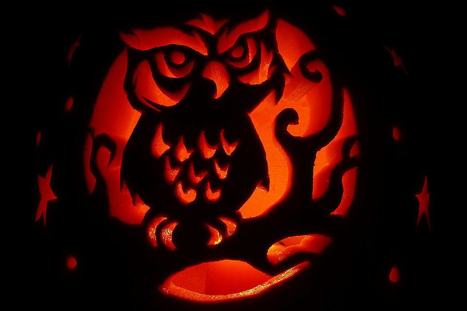 Carved Owl Pumpkin