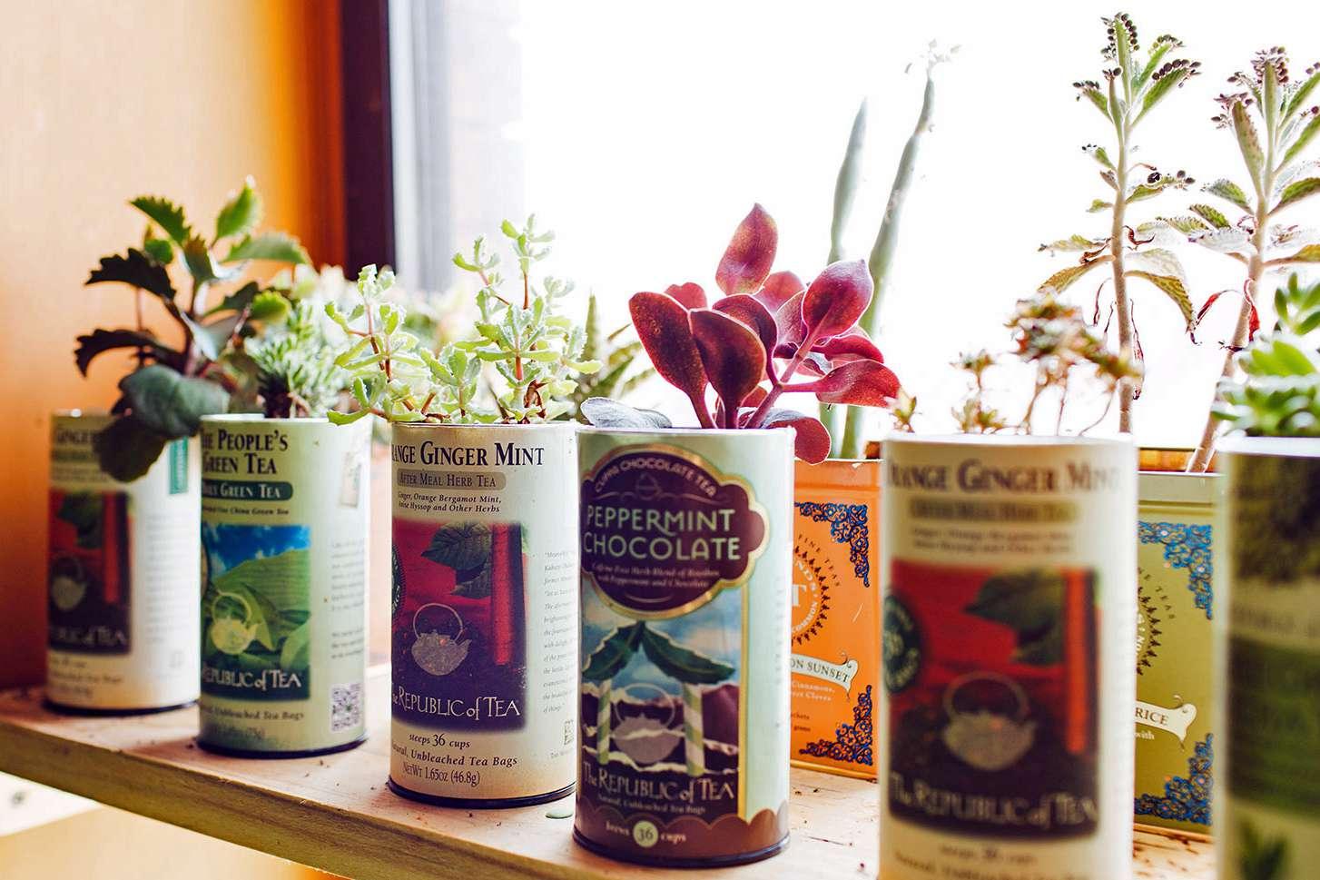 Tea Container Planter
