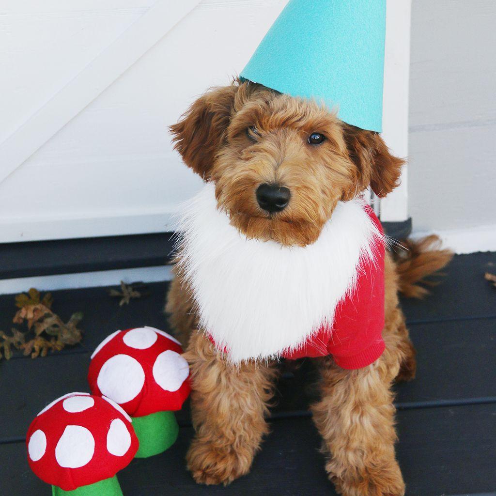 DIY dog costume ideas gnome