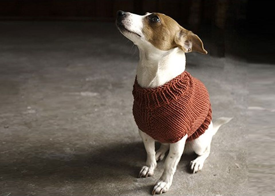 Juno Dog Sweater Knitting Pattern