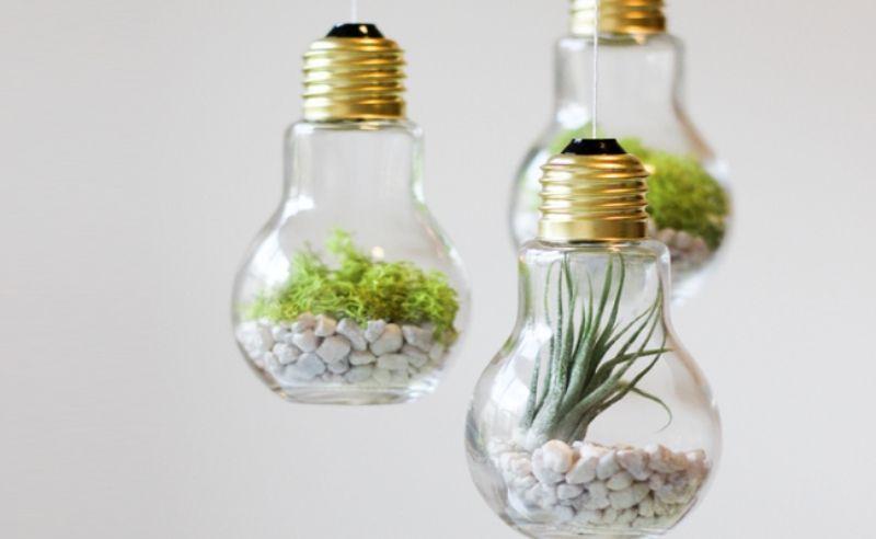 Hanging green terrariums inside light bulbs.