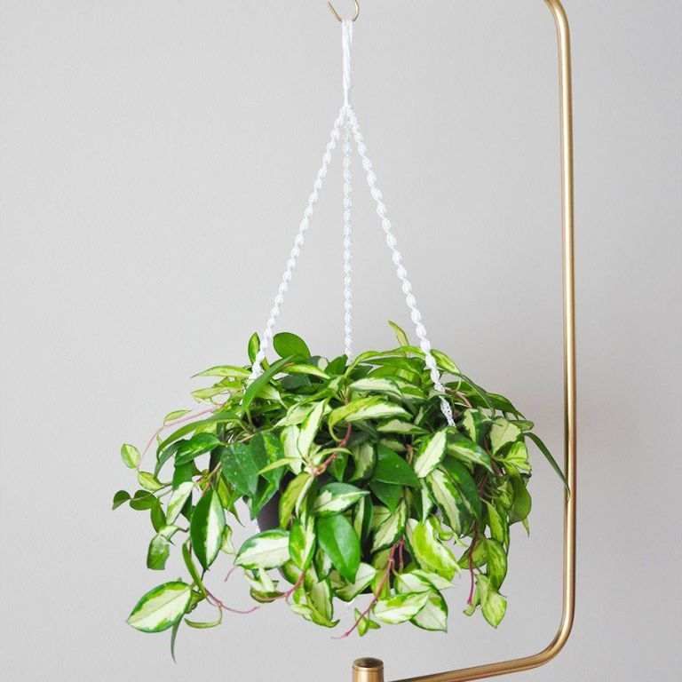 diy macrame plant holder