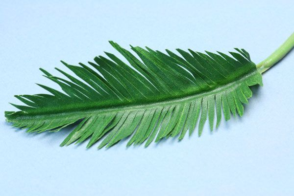 Fringed segment of a miniature frond cut to a point