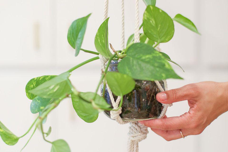 DIY mason jar macrame plant hanger