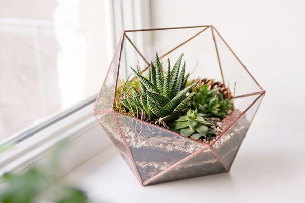 mini succulent garden in glass terrarium