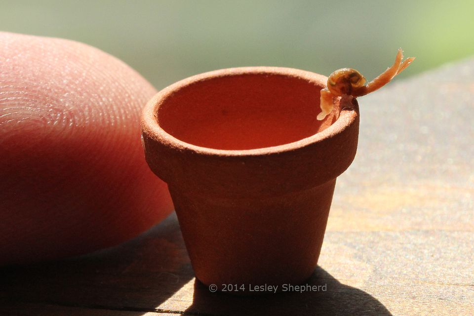 Dollhouse scale snail on the rim of a terracotta flower pot.