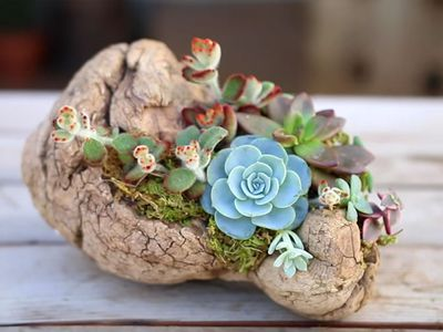 how to display succulents 30 cute examples.htm 30 great tiny planters you can make yourself  30 great tiny planters you can make