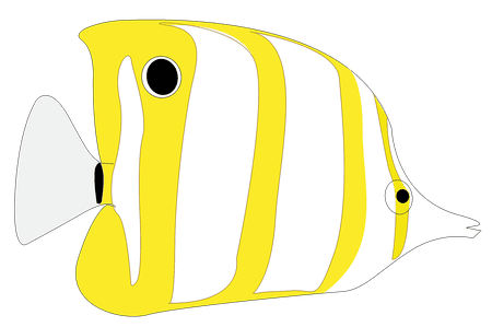 A Yellow And White Striped Fish