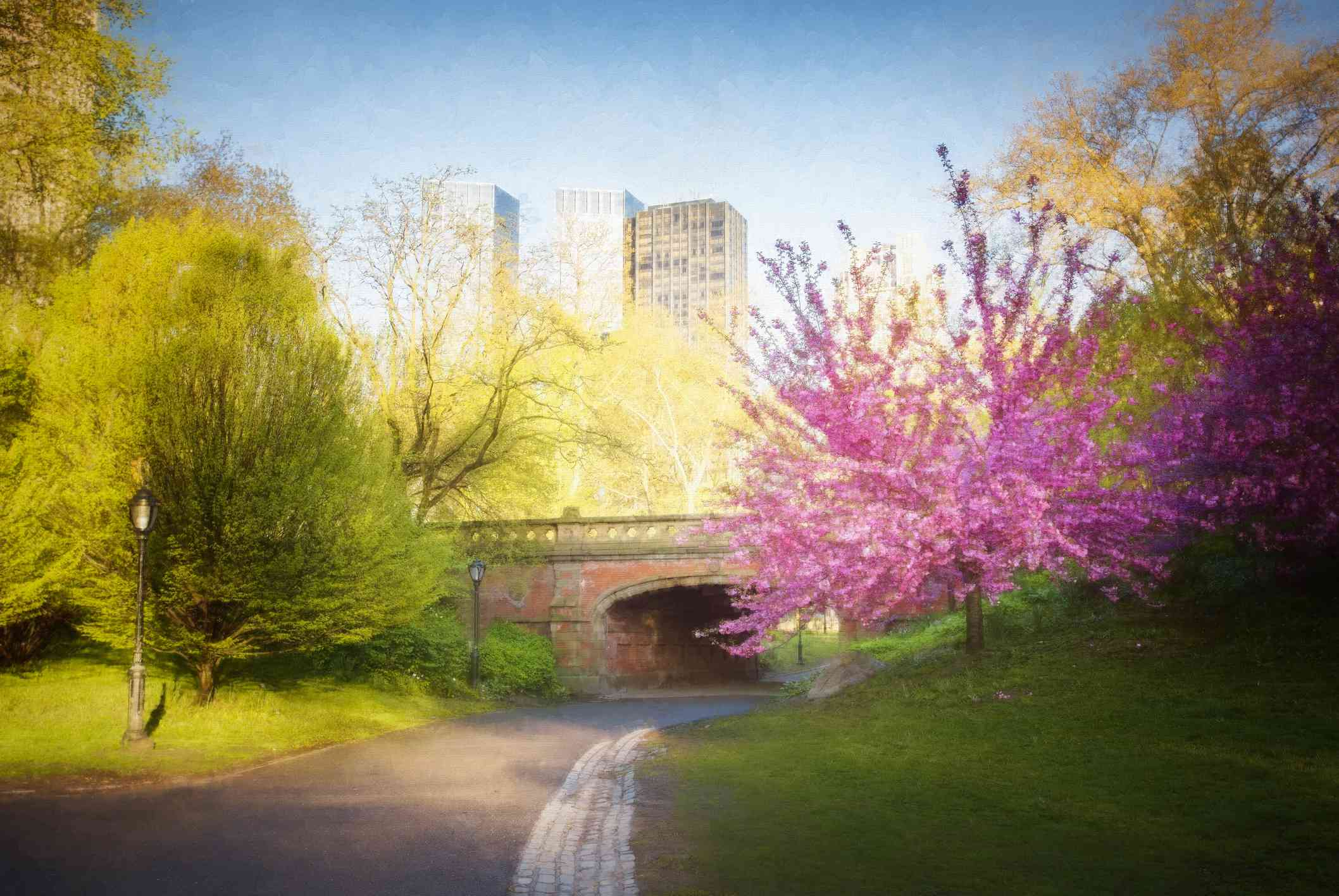 Cherry Blossoms, Spring, Bridge and Central Park, NYC.