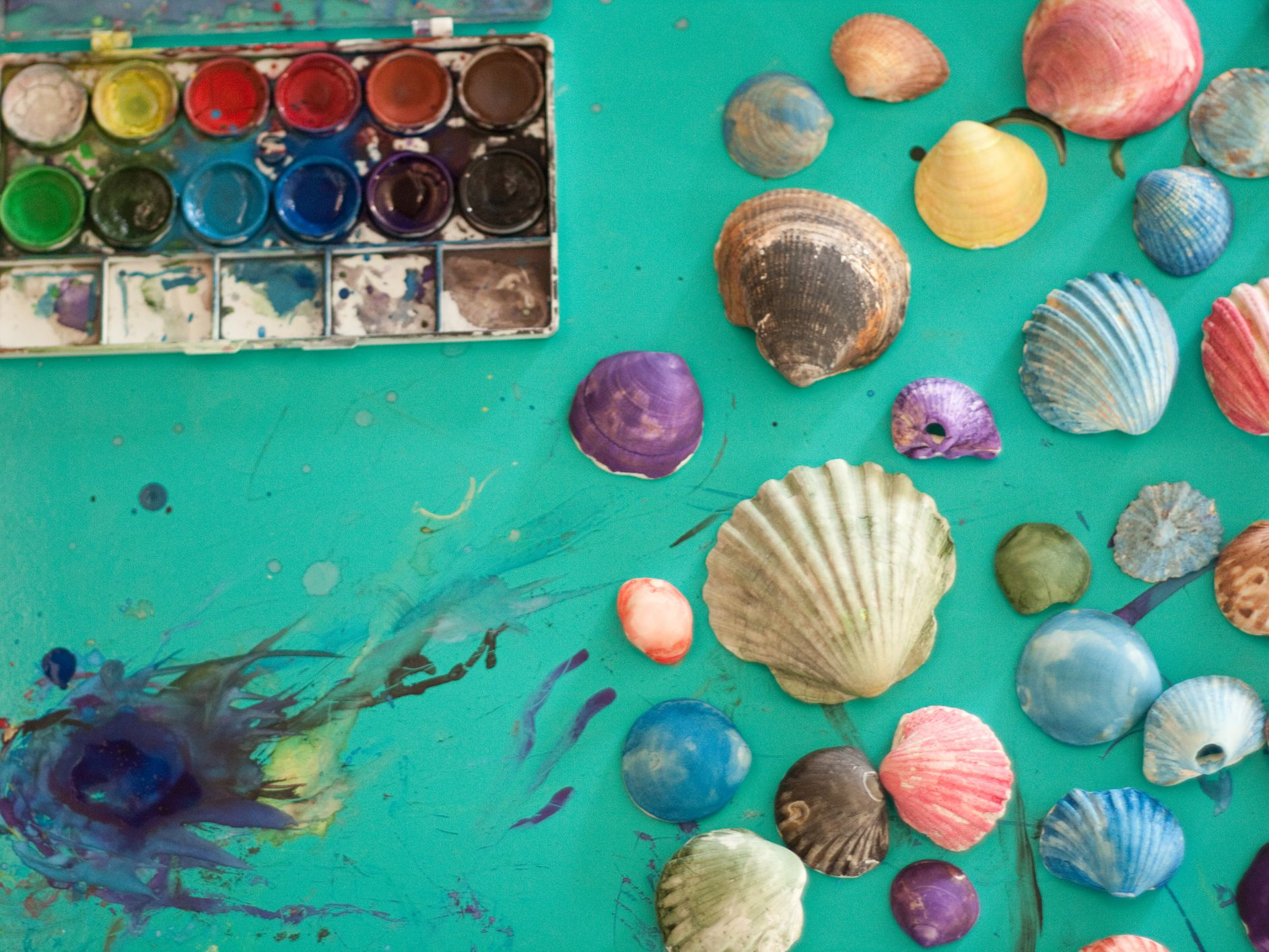 9 Seashell Crafts For Kids