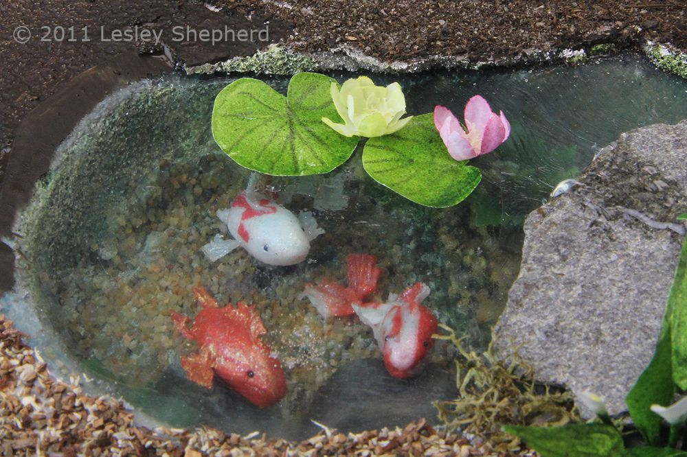 Water lilies sit on the faux water surface of a dollhouse koi pond made from sheet styrene.