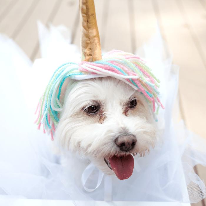 DIY dog unicorn costume