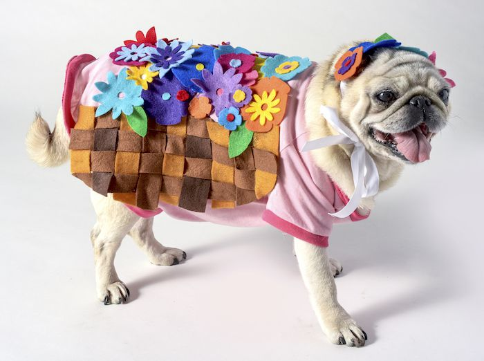 15 Diys To Dress Up Your Dog This Halloween