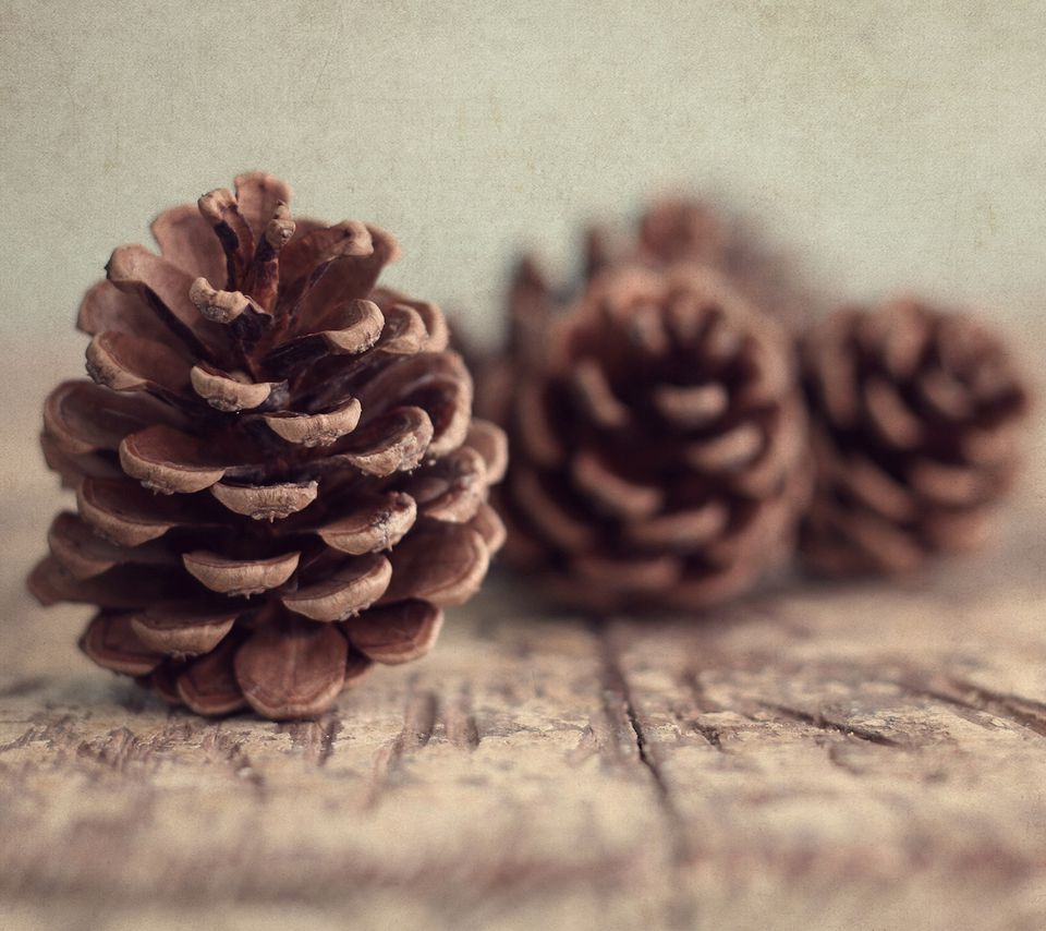 Pine cones on wooden table.
