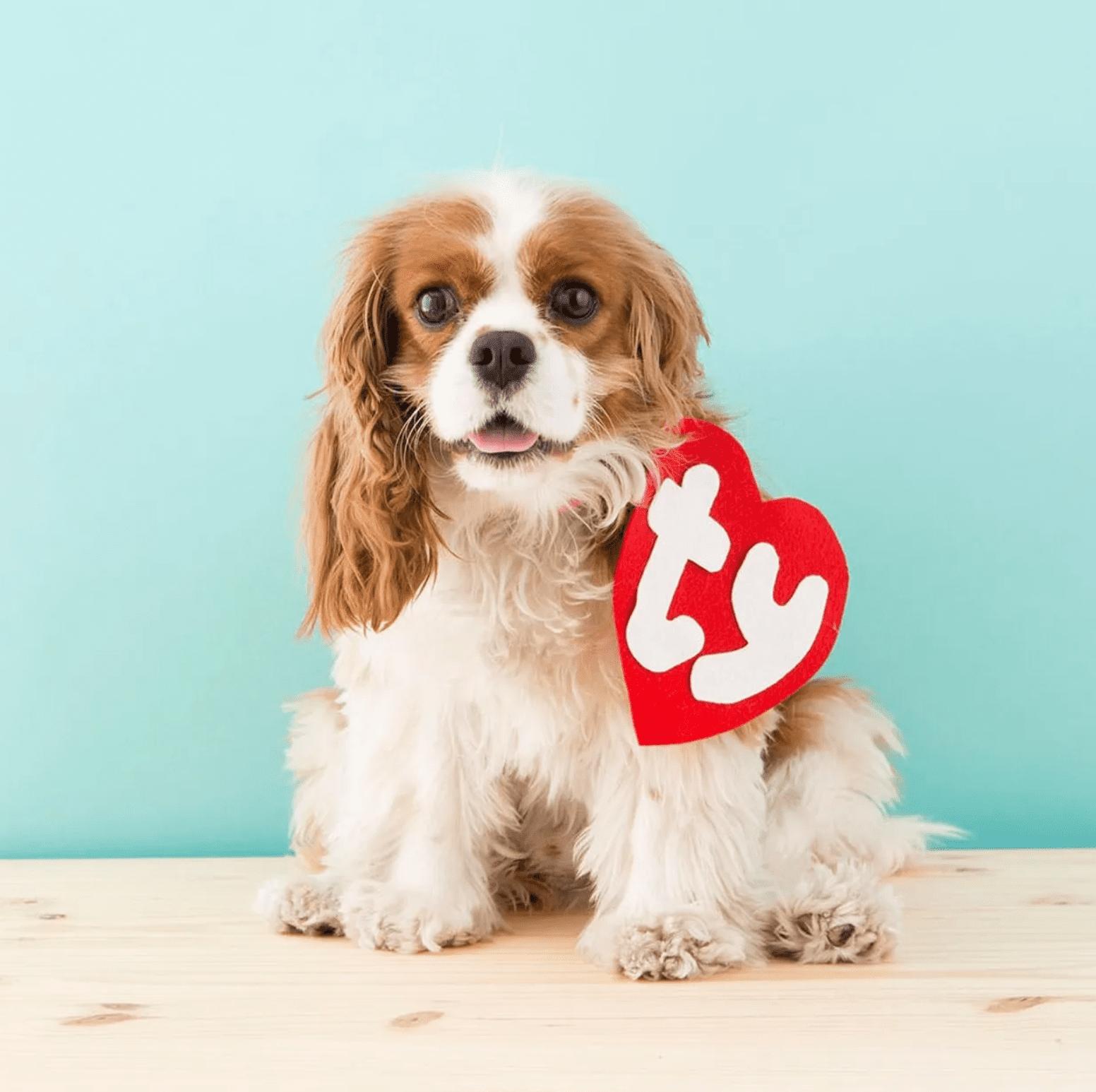 Brit & Co. Ty Beanie Baby Dog Costume