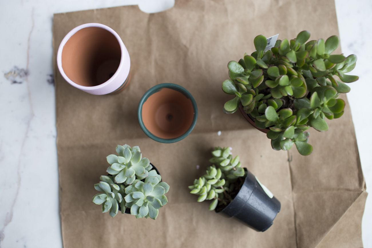 Arial view of pots and plants