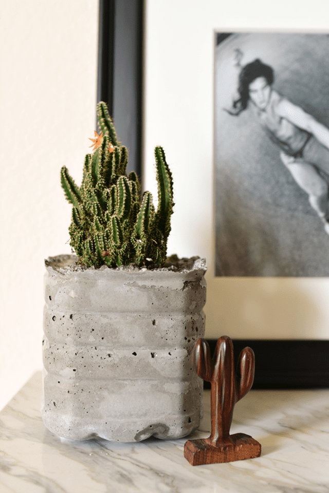 concrete planter made with water bottle
