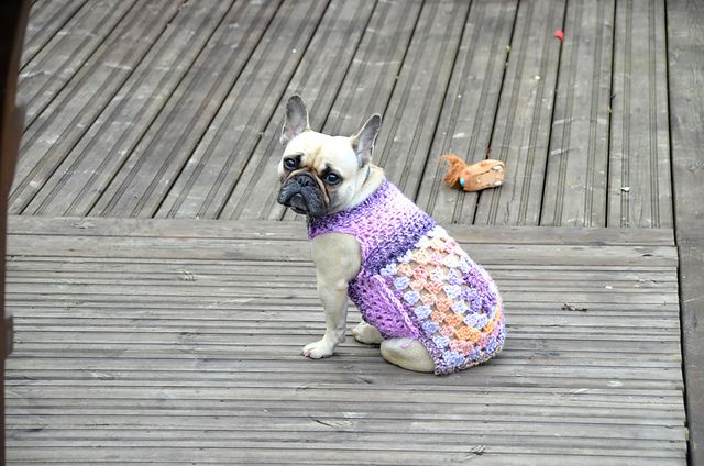 French bulldog in a colorful crochet sweater sitting on a deck