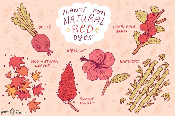 illustration of plants used for making natural red dyes