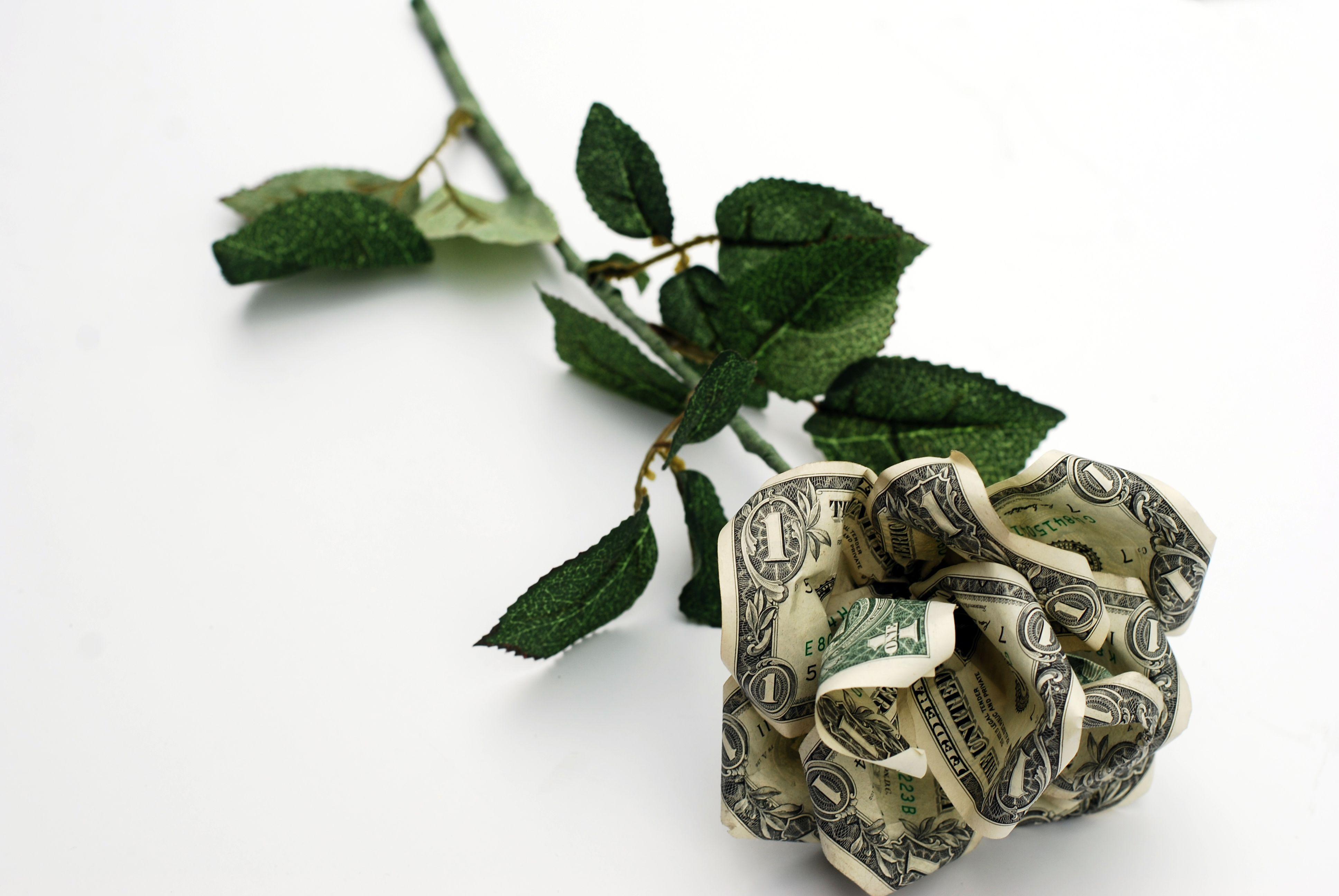 Rose from dollar bills