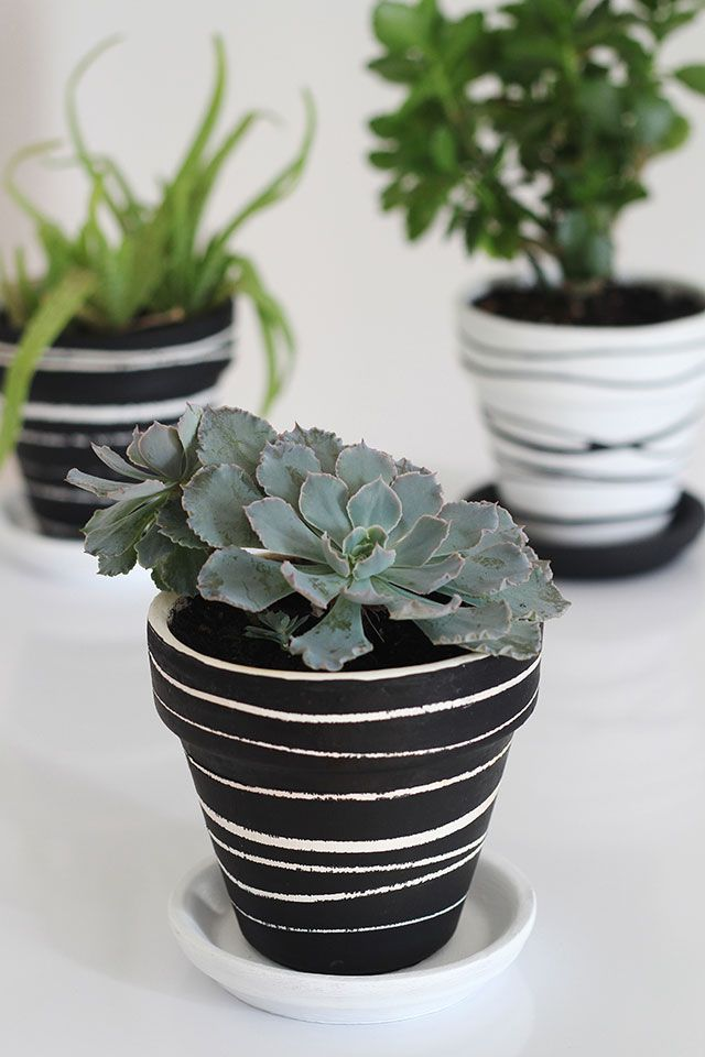 Black and white painted flower pots with stripes