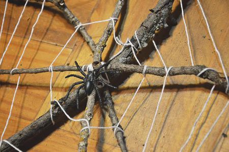 Cool Fun Spider Crafts For Kids