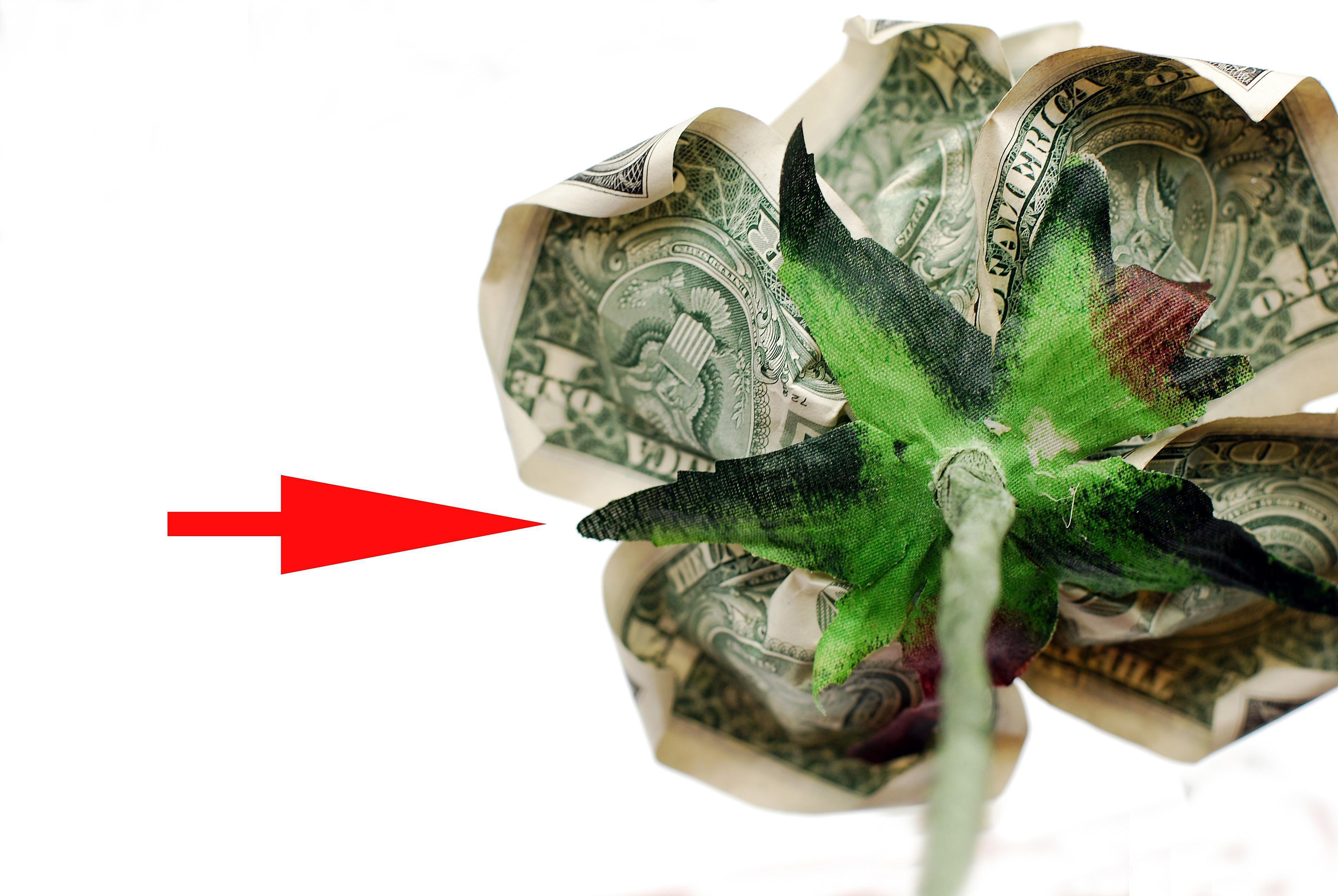Sepal on bottom of money rose