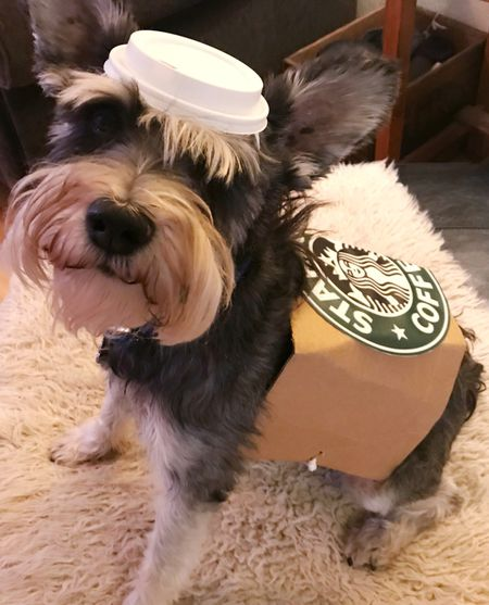 diy dog costume starbucks