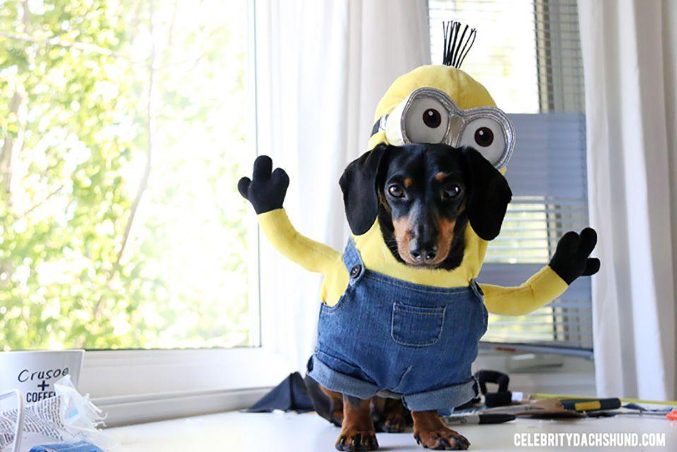 DIY stuffed animal dog costum