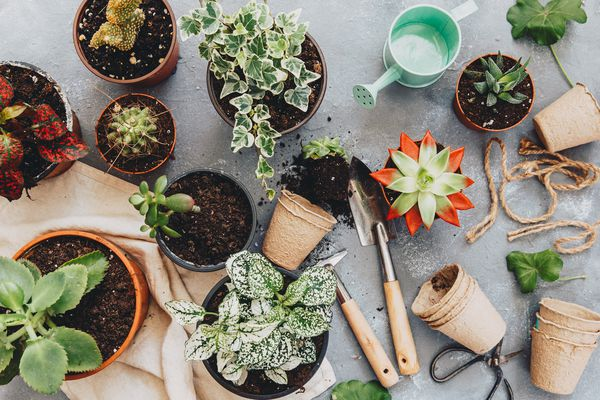 Cactus plant with gardening tools