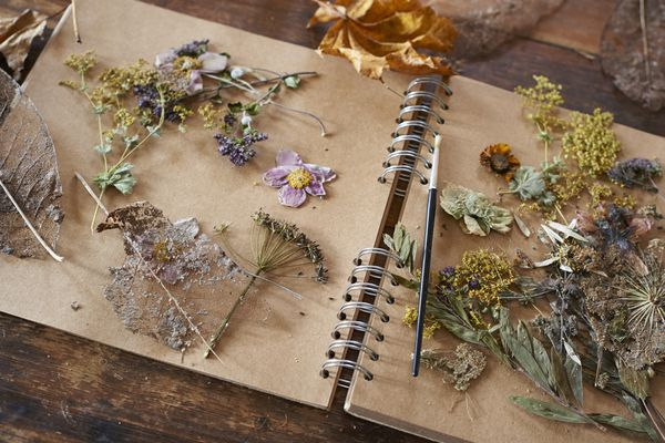 Dried flowers and herbs on a notebook