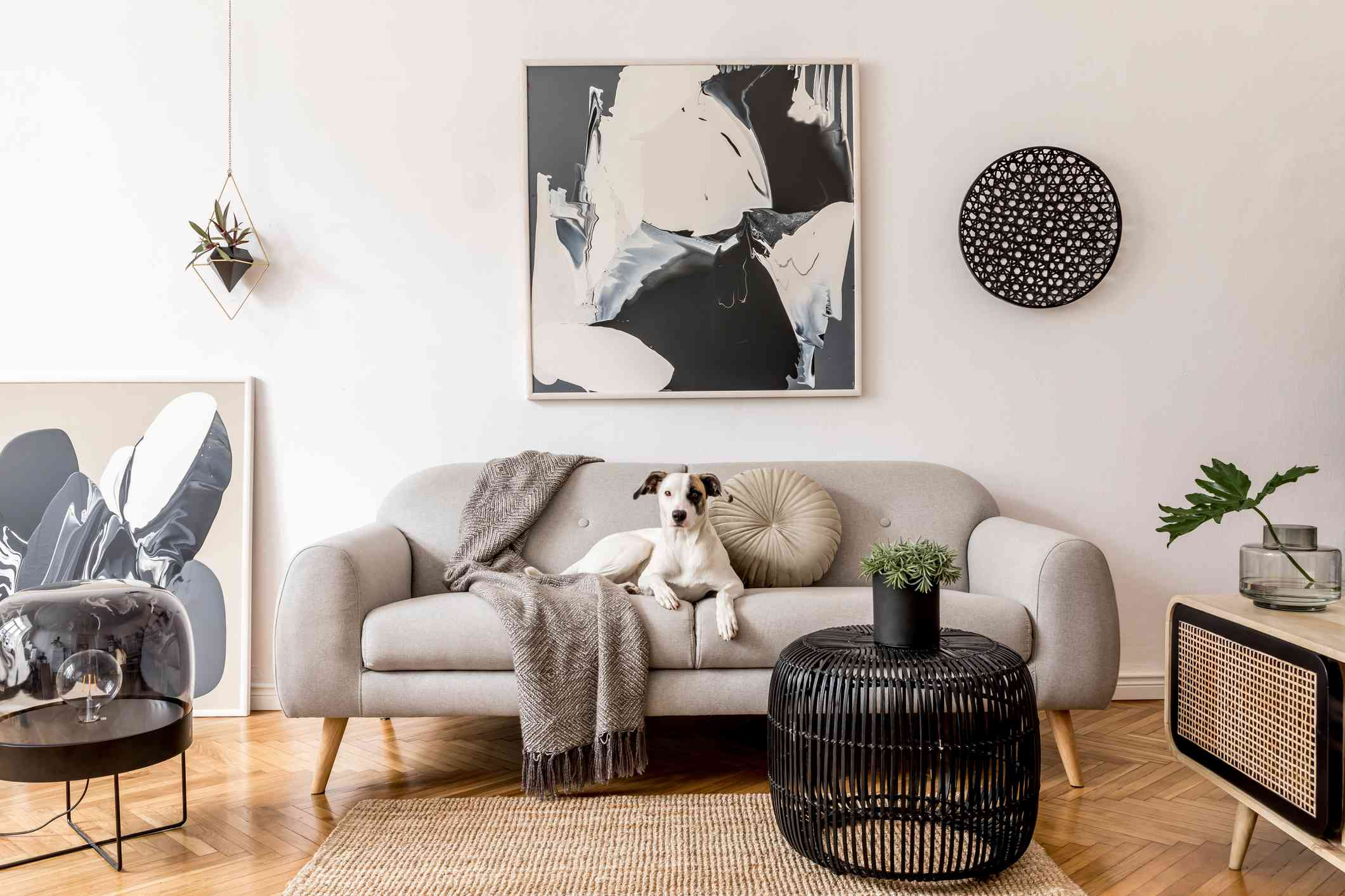 Stylish and scandinavian living room interior of modern apartment with gray sofa, design wooden commode, black table, lamp, abstrac paintings on the wall. Beautiful dog lying on the couch. Home decor.