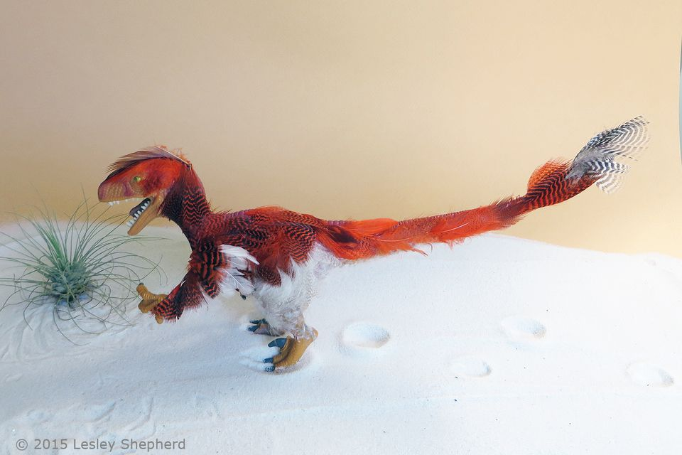 Velociraptor model with a coat of feathers.